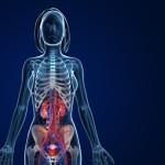 female-urinary